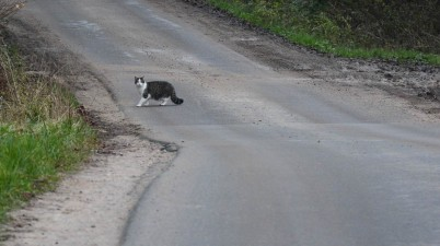 cat crossing a country road