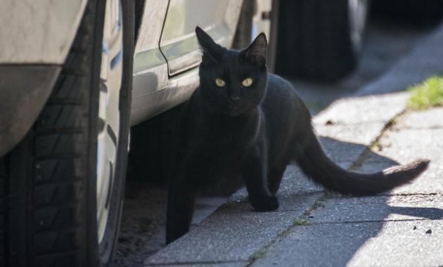 shy cat near a car