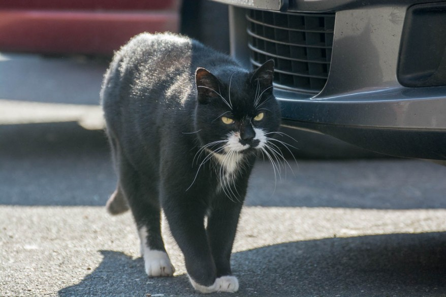 street cat near a car