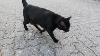 black neighbor cat snapshot