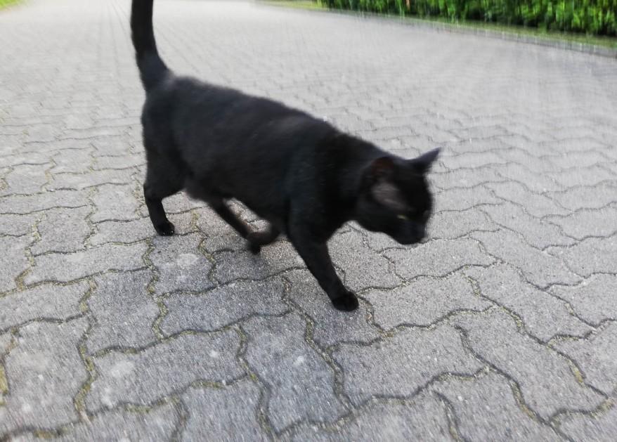 black neighbor cat snapshot