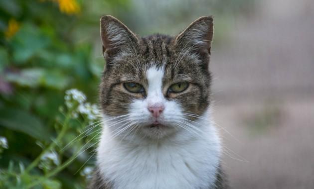 another garden cat