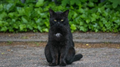 grumpy black cat