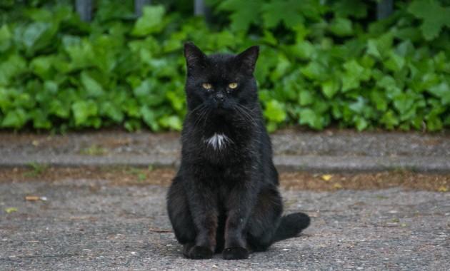 grumpy black cat