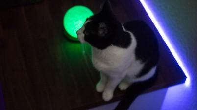 my cat on my desktop