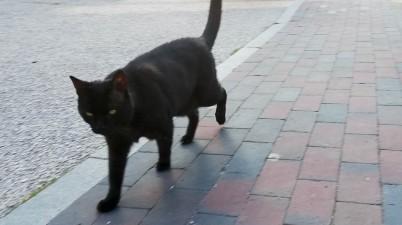 black neighbor cat