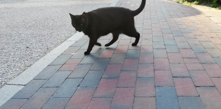black neighbor cat