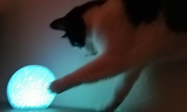 my cat asking the crystal ball