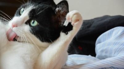 cat snapshot