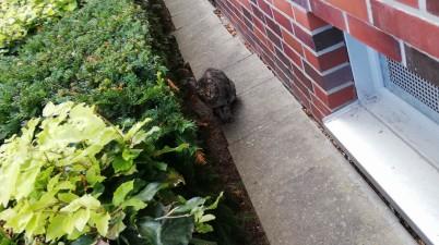 outdoor cat snapshot