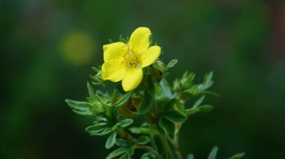 yellow flower plant