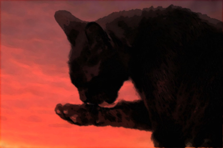 black cat with red background