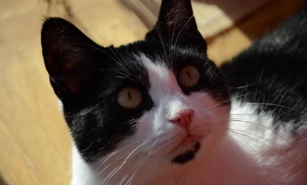 snapshot of my cat