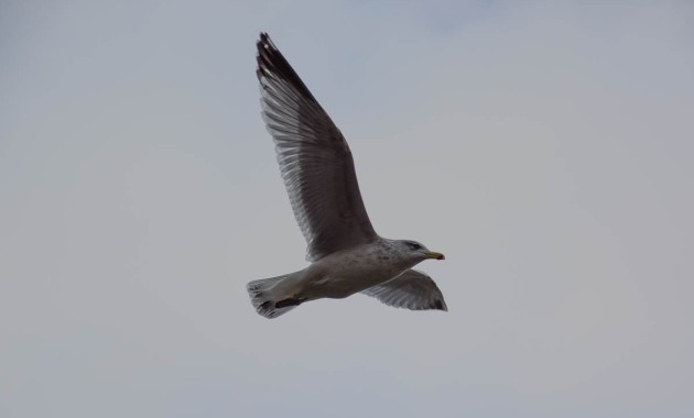 just a photo of a seagull