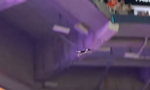 Flying Tuxedo Cat